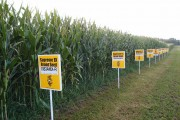 White House Orders GMO Regulators To Review Their Rules