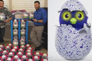 'Hatchimals': Christmas Blockbuster Toy This Year Equipped With Canadian Innovation